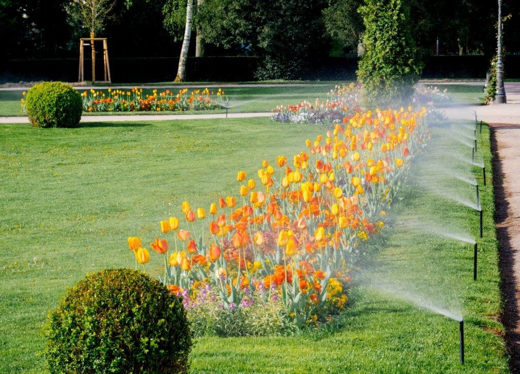 flowers in a commercial garden being watered